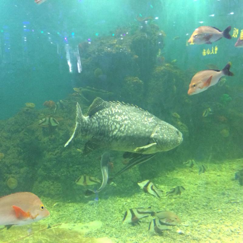 壁纸 动物 海底 海底世界 海洋馆 水族馆 鱼 鱼类 800_800